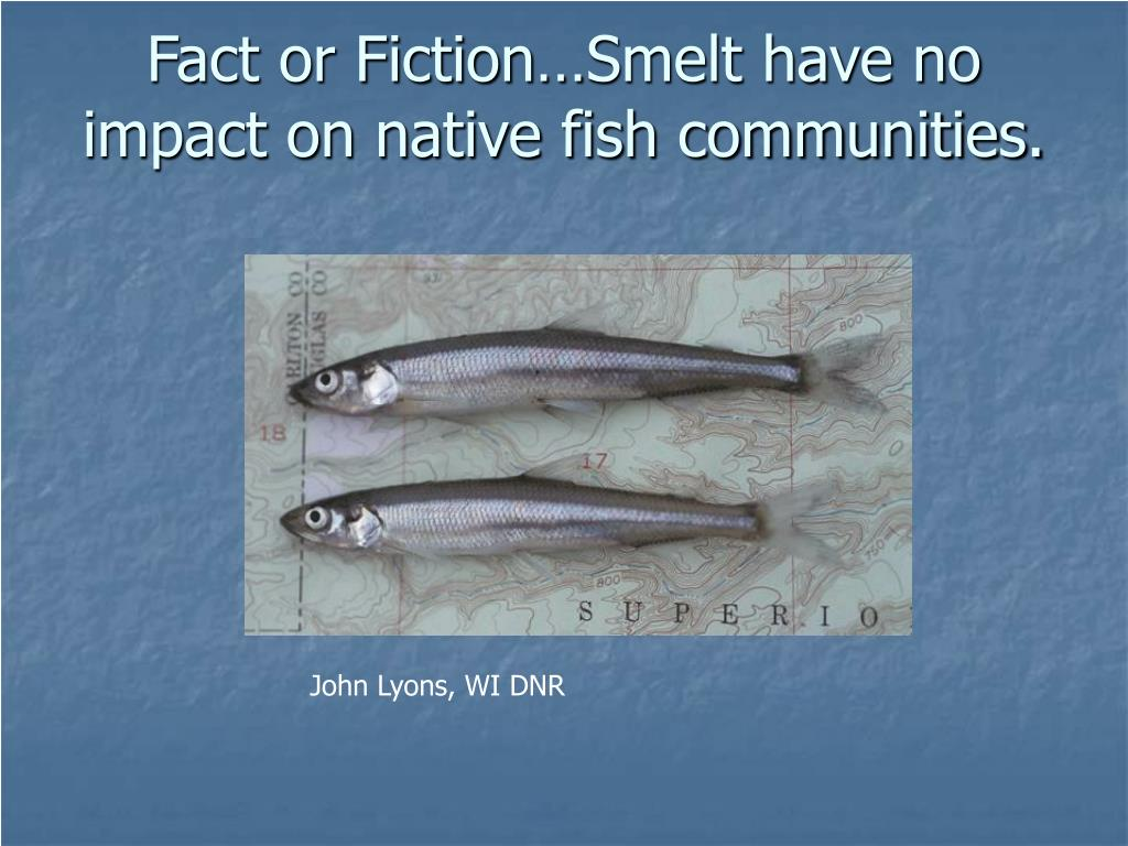 Fact or Fiction…Smelt have no impact on native fish communities.