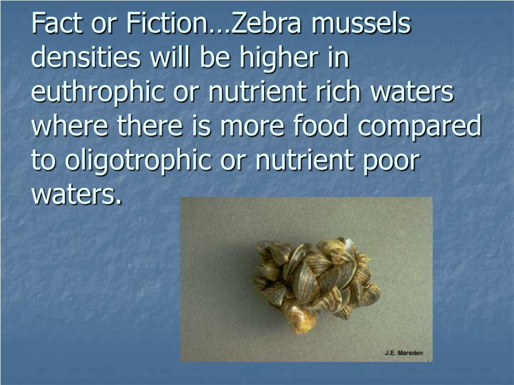 Fact or Fiction…Zebra mussels densities will be higher in euthrophic or nutrient rich waters where there is more food compared to oligotrophic or nutrient poor waters.