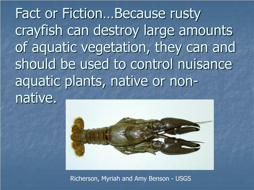 Fact or Fiction…Because rusty crayfish can destroy large amounts of aquatic vegetation, they can and should be used to control nuisance aquatic plants, native or non-native.