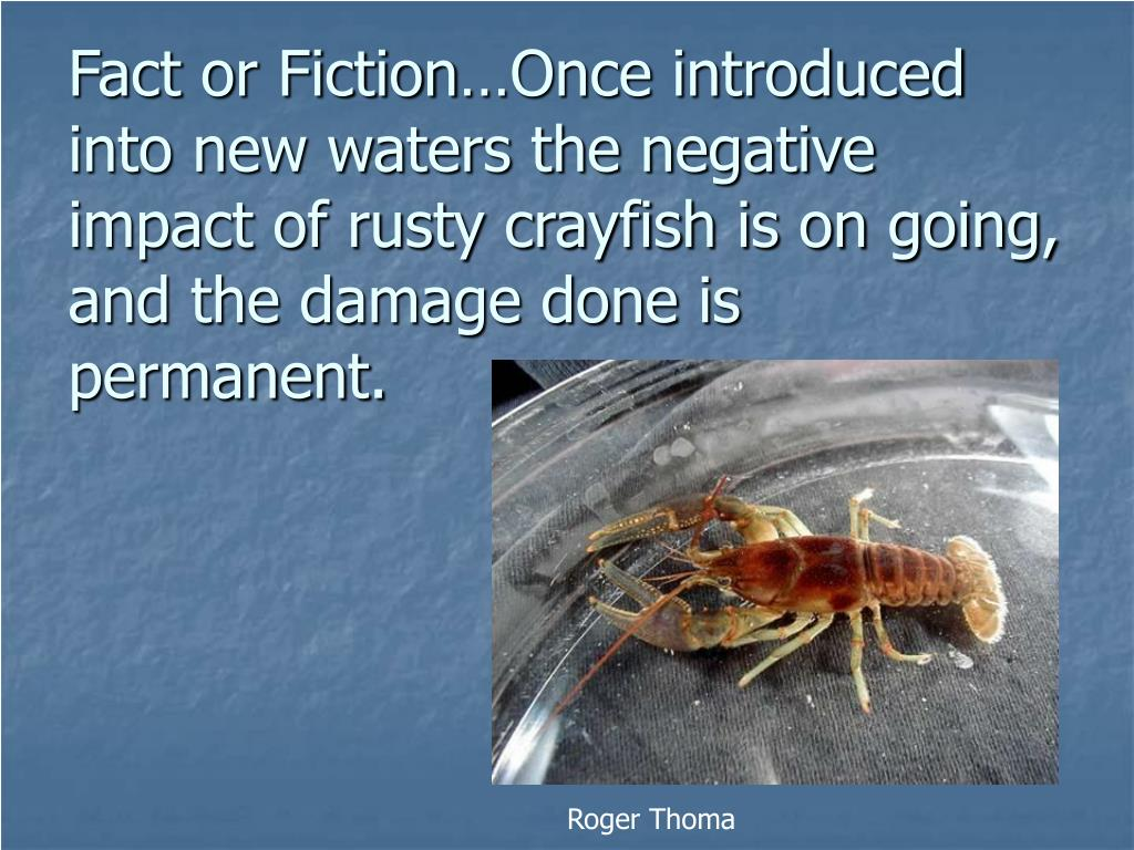 Fact or Fiction…Once introduced into new waters the negative impact of rusty crayfish is on going, and the damage done is permanent.