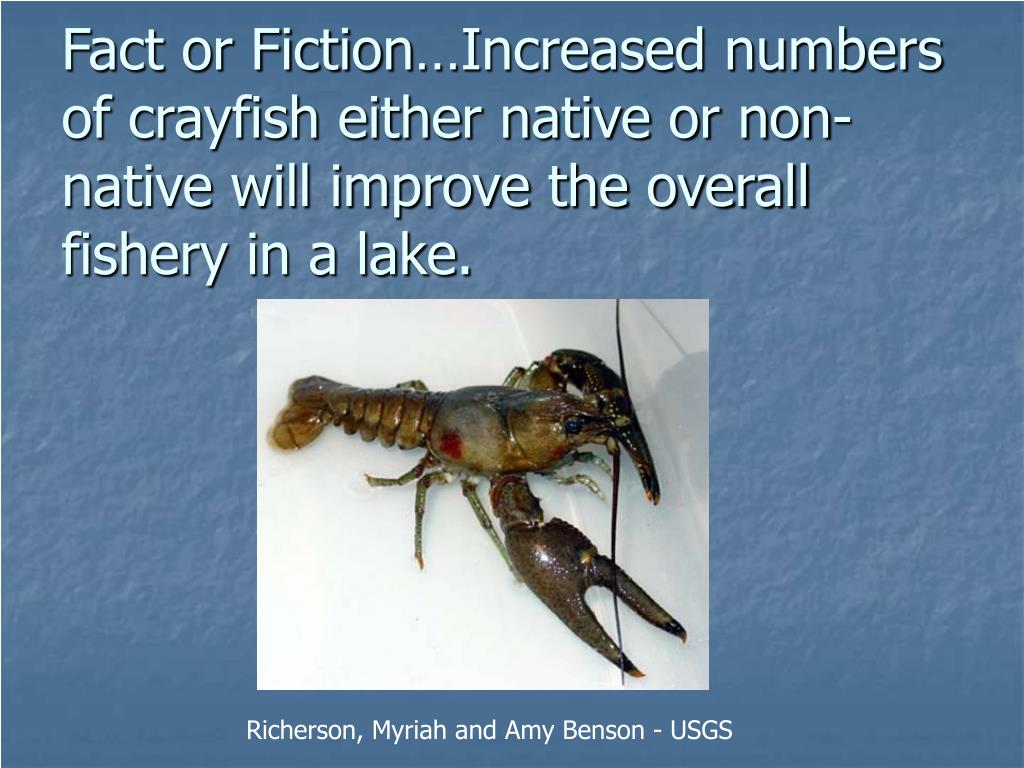Fact or Fiction…Increased numbers of crayfish either native or non-native will improve the overall fishery in a lake.