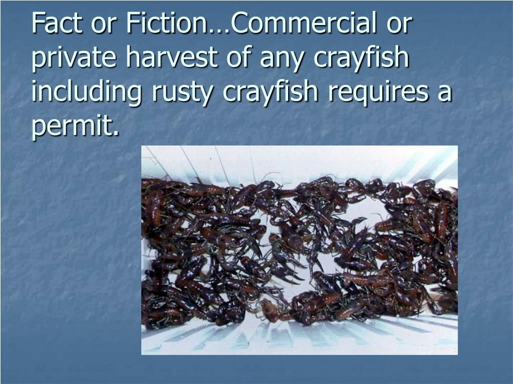 Fact or Fiction…Commercial or private harvest of any crayfish including rusty crayfish requires a permit.