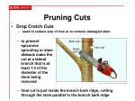 pruning cuts12
