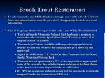 brook trout restoration