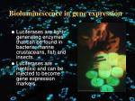 bioluminescence in gene expression