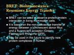 bret bioluminescence resonance energy transfer1