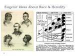 eugenic ideas about race heredity