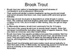 brook trout20