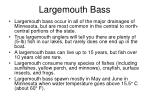 largemouth bass67