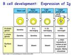 b cell development expression of ig10