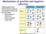 mechanisms of positive and negative selection