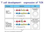 t cell development expression of tcr32