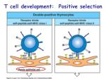 t cell development positive selection