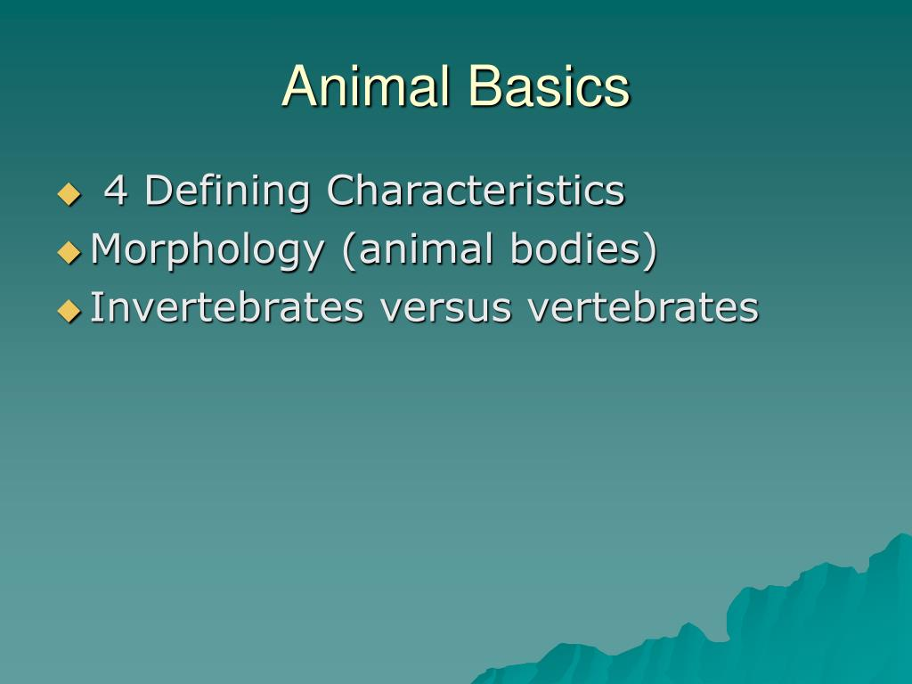 Animal Basics