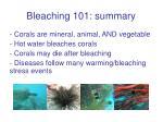 bleaching 101 summary