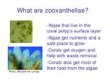 what are zooxanthellae6