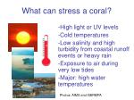 what can stress a coral