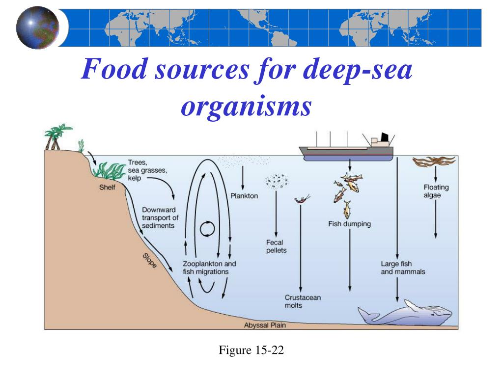 Food sources for deep-sea organisms