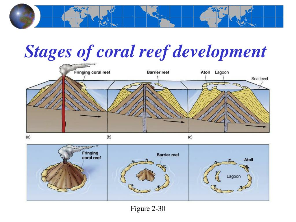 Stages of coral reef development