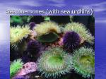 sea anemones with sea urchins