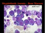 megaloblastic anemia bone marrow