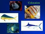 coloration20