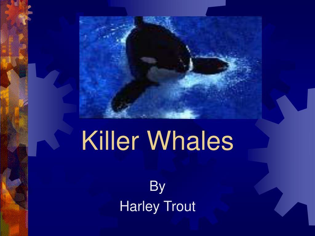 killer whales l.