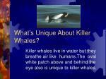 what s unique about killer whales