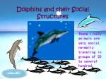 dolphins and their social structures