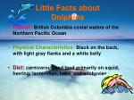 little facts about dolphins