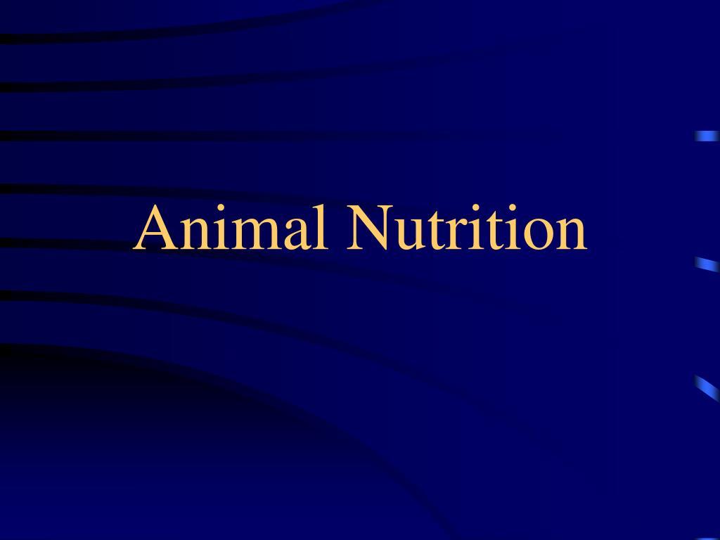 animal nutrition l.