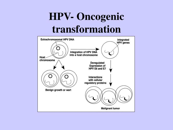 HPV- Oncogenic transformation
