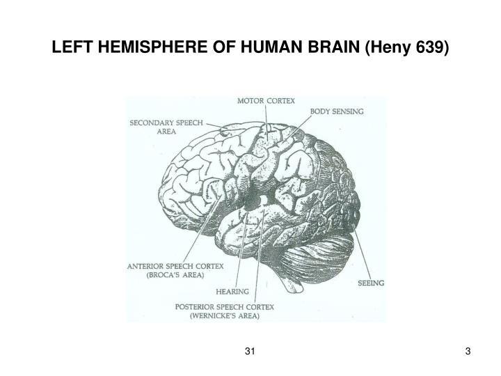 Left hemisphere of human brain heny 639