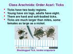 class arachnida order acari ticks