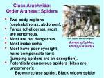class arachnida order araneae spiders