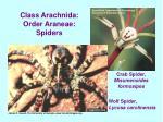 class arachnida order araneae spiders13
