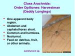 class arachnida order opiliones harvestman daddy longlegs