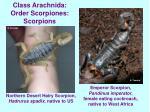 class arachnida order scorpiones scorpions16