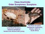class arachnida order scorpiones scorpions18