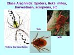 class arachnida spiders ticks mites harvestman scorpions etc