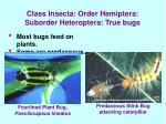 class insecta order hemiptera suborder heteroptera true bugs