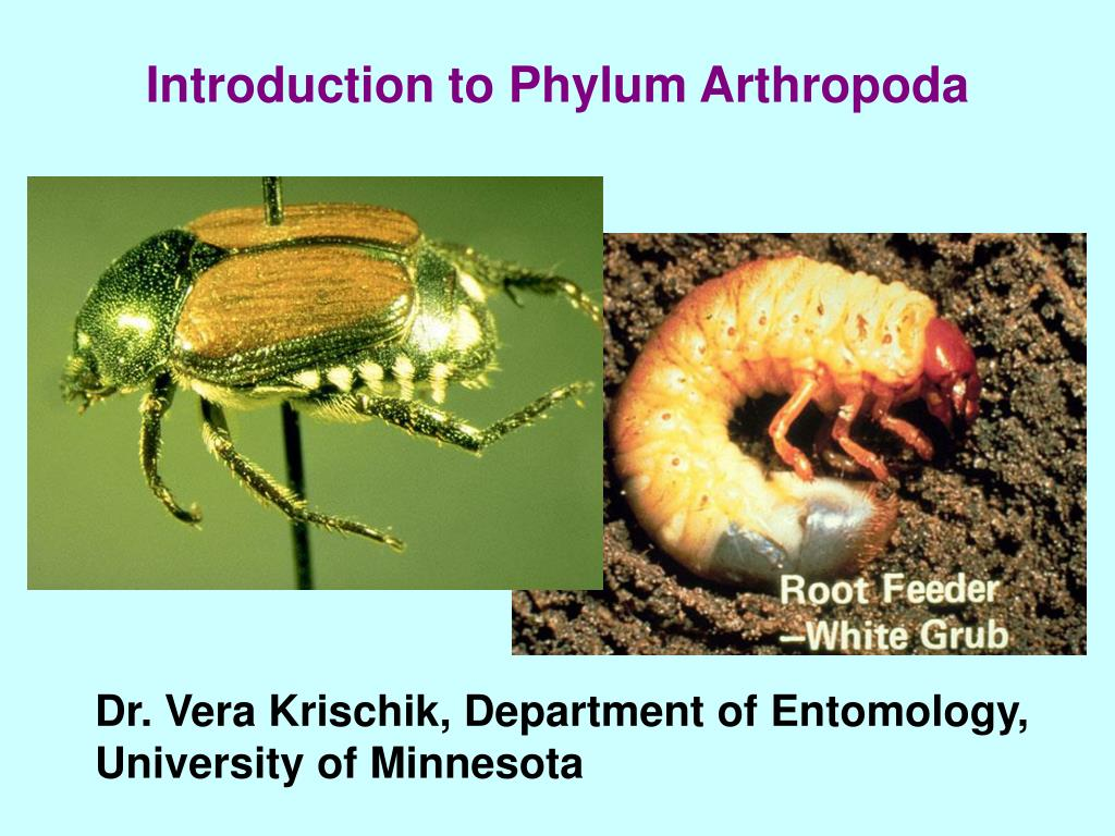 introduction to phylum arthropoda l.