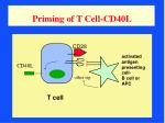 priming of t cell cd40l
