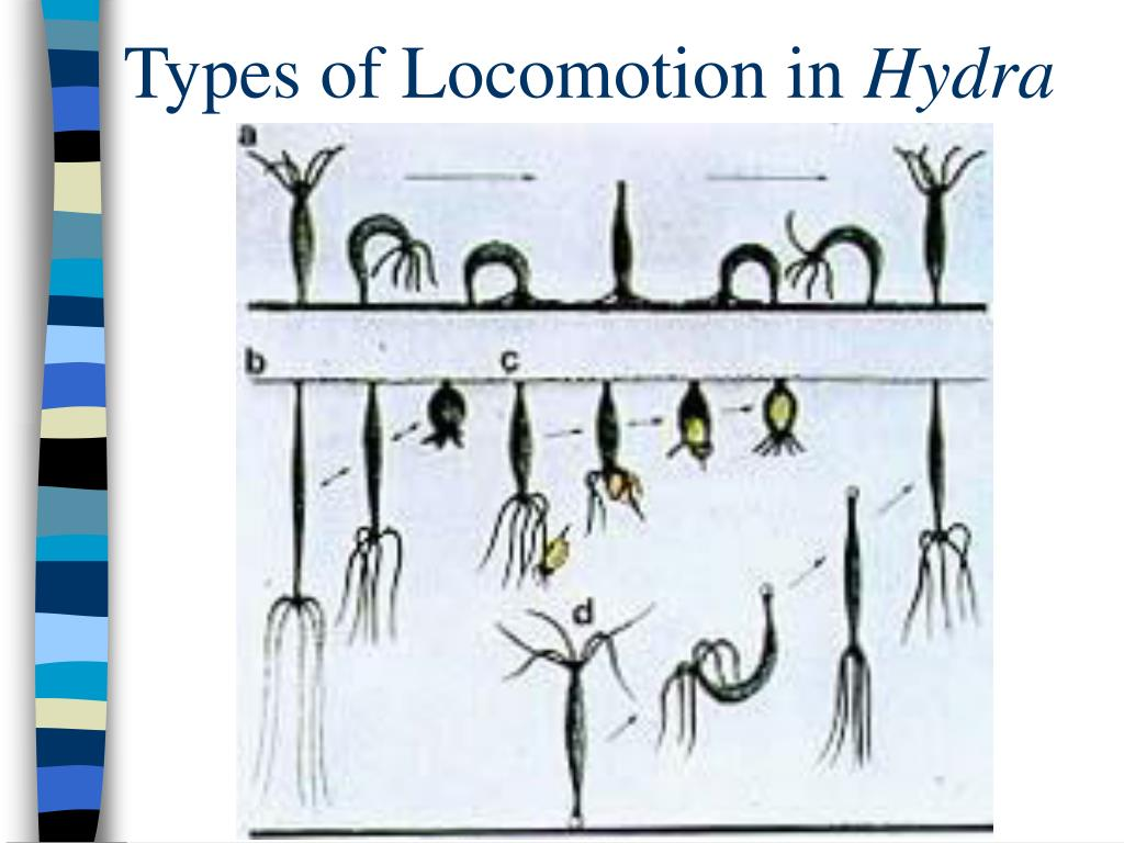 Types of Locomotion in