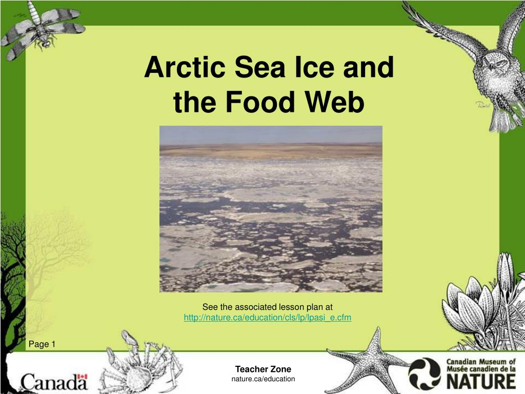 arctic sea ice and the food web l.