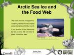 arctic sea ice and the food web19