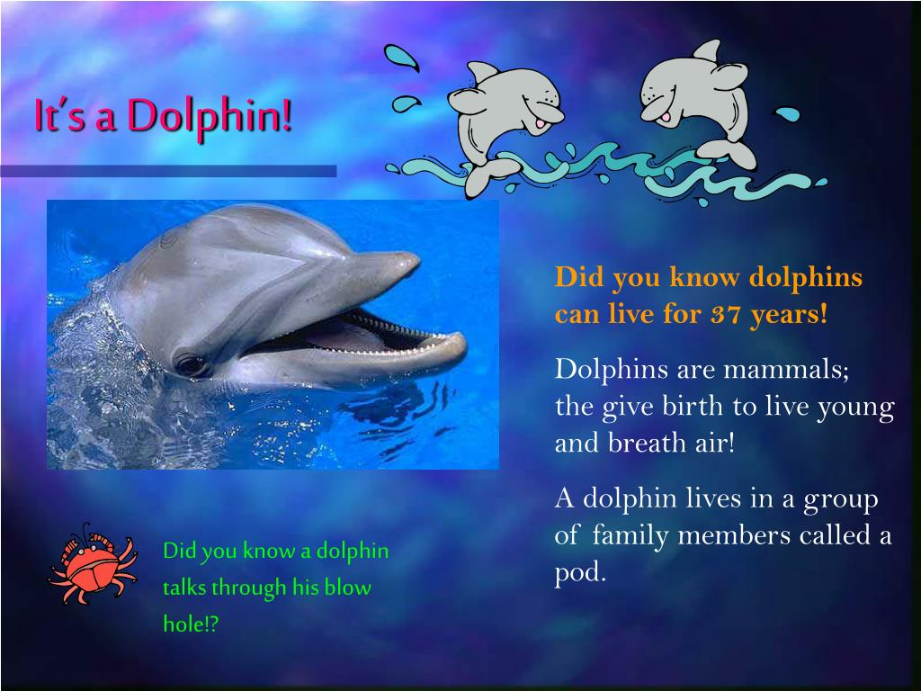 It's a Dolphin!