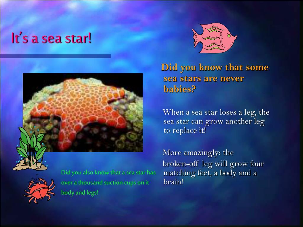 It's a sea star!