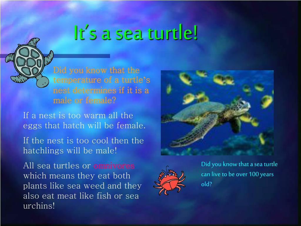 It's a sea turtle!