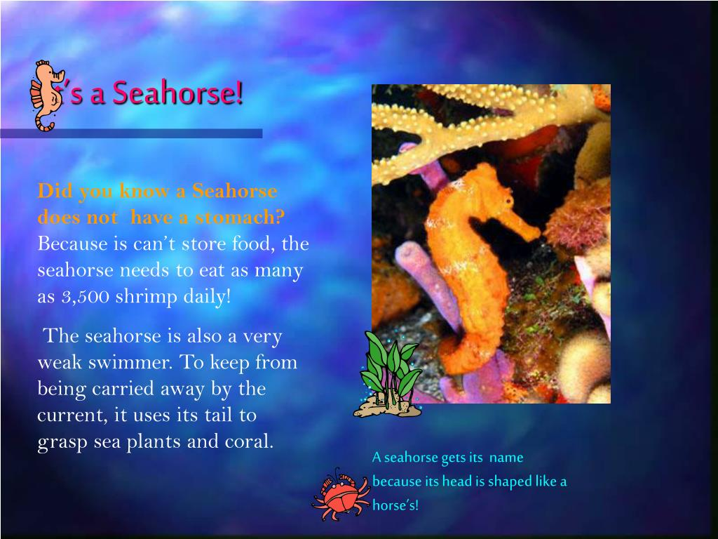 It's a Seahorse!